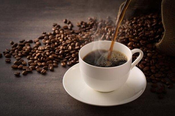 蜘蛛はコーヒーを飲むと酔っ払い、まともに巣を作れなくなるって本当?/毎日雑学1